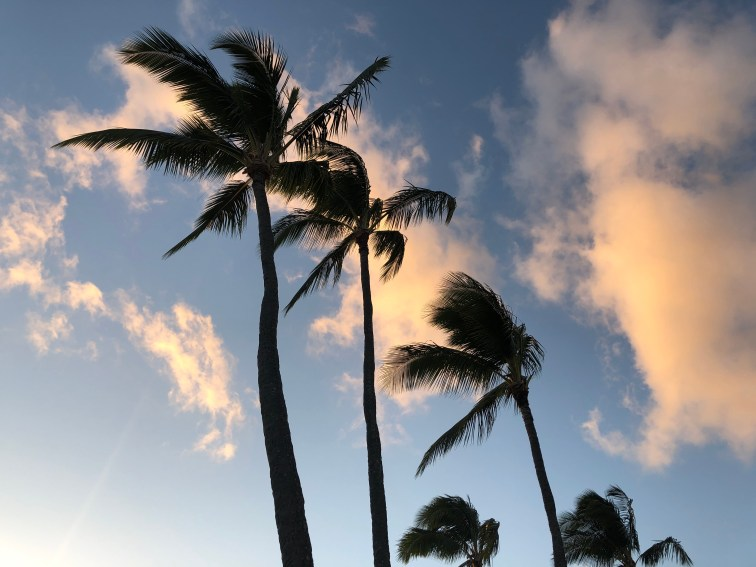 Palm Trees, Po'ipu Beach
