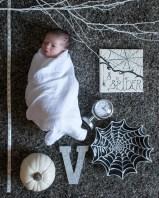 Baby Spider Theme Portrait