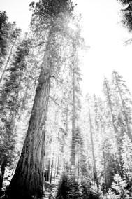 Travel_California-60