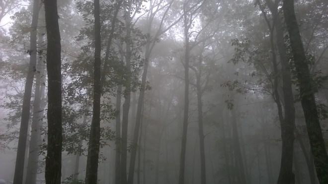 Monte Sano forest glow