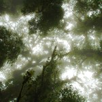 a photo looking up through the mist into the canopy from the ground