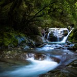 long exposure of a stream cascading through the forest
