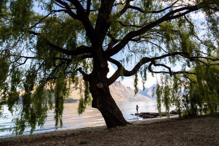 A woman stands lakeside in queenstown among the huge trees
