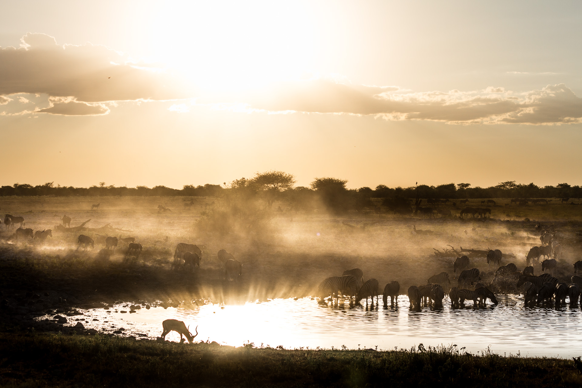 sunset light over a watering hole in etosha