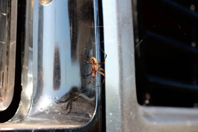 A spider! Guess the Dodge D150 he was hanging out on hasn't been driven in a while.