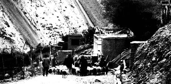 Villagers corralling livestock to a river in Ursi   Ladakh