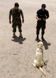 Training anti-narcotics dog