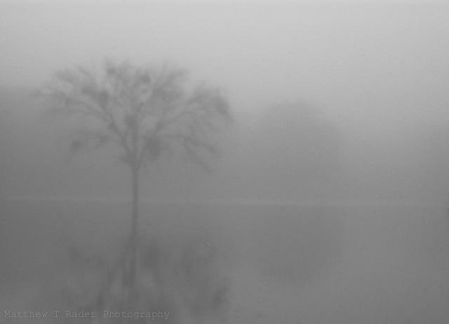 Lone Tree in Texas Fog