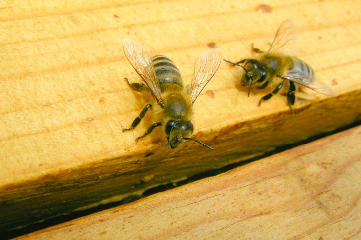 Honey Bees by Matthew T Rader