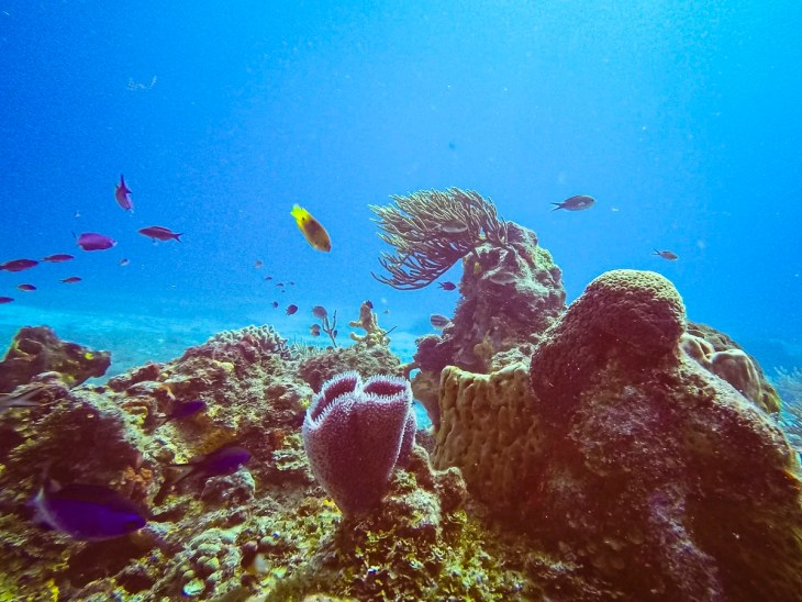 Coral and fish in Cozumel
