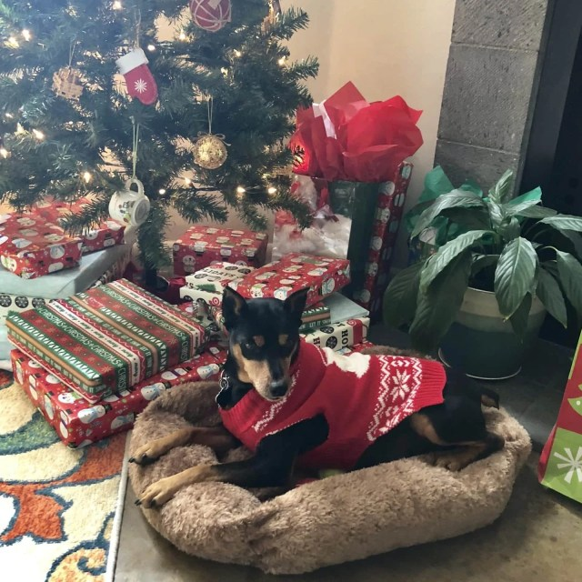 My Dog Ran Away On Christmas Day... We Found Him Two Weeks Later