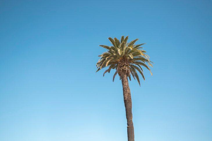 A palm tree at Ocean Beach, San Diego