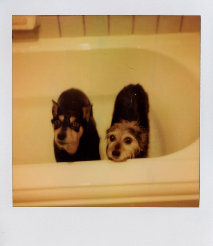 Gambit and Lucy taking a bath