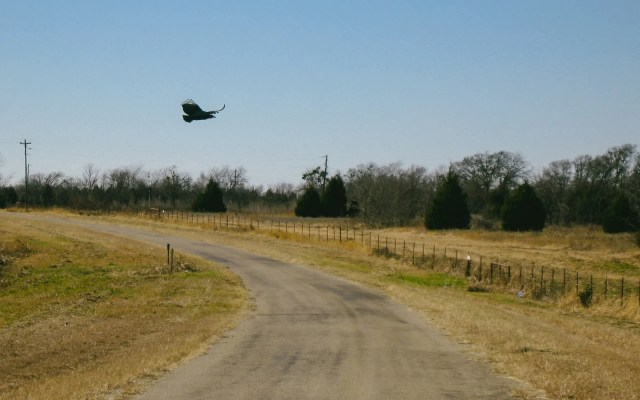 A bird flying over a country road