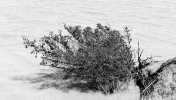 Trees In Lake Ray Hubbard