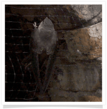 bird trapped in chimney