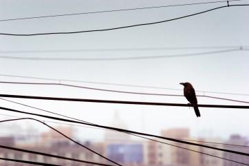 bird. pune, 2008