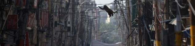 wires-india-monkey