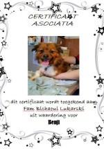 Adoptie-Benji