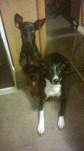 Hilda & Spykie