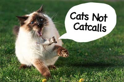 cats not catcalls