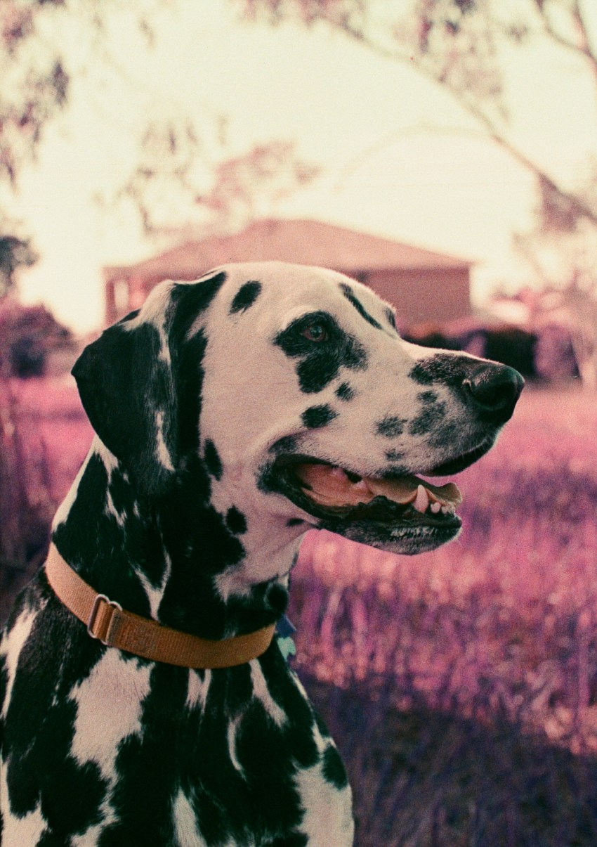 LomoChrome Purple review with images