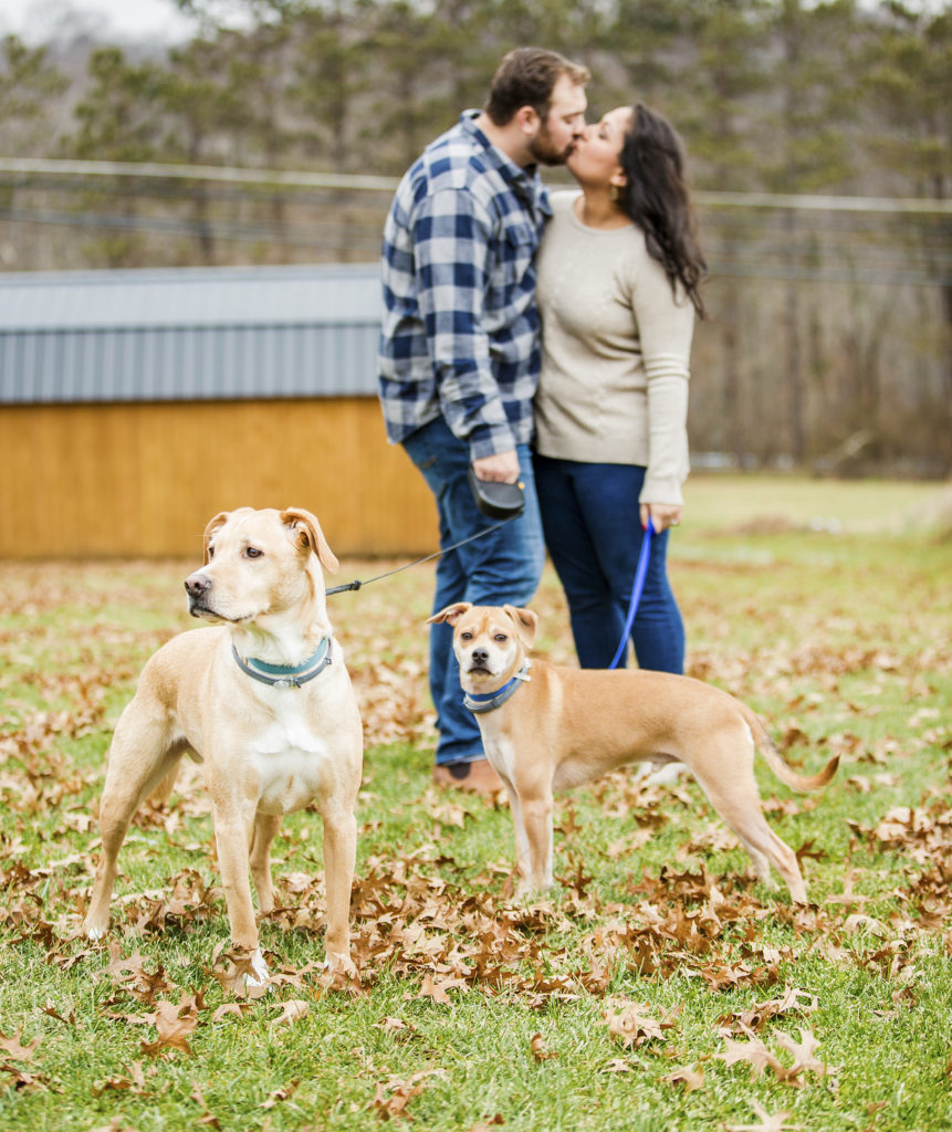Couple kisses while holding their dogs on leashes during winter engagement photos at their home