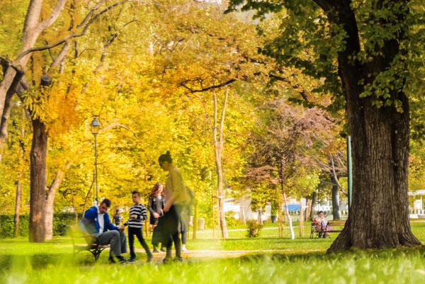 Family spending time in the park.