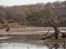 One of the lakes in zone 5 of the Ranthambore NP