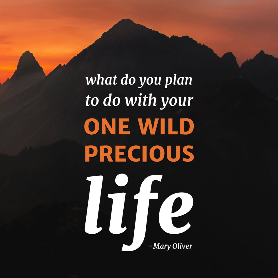 what do you plan to do with your one wild precious life?