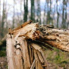 Fallen tree. Still beutiful