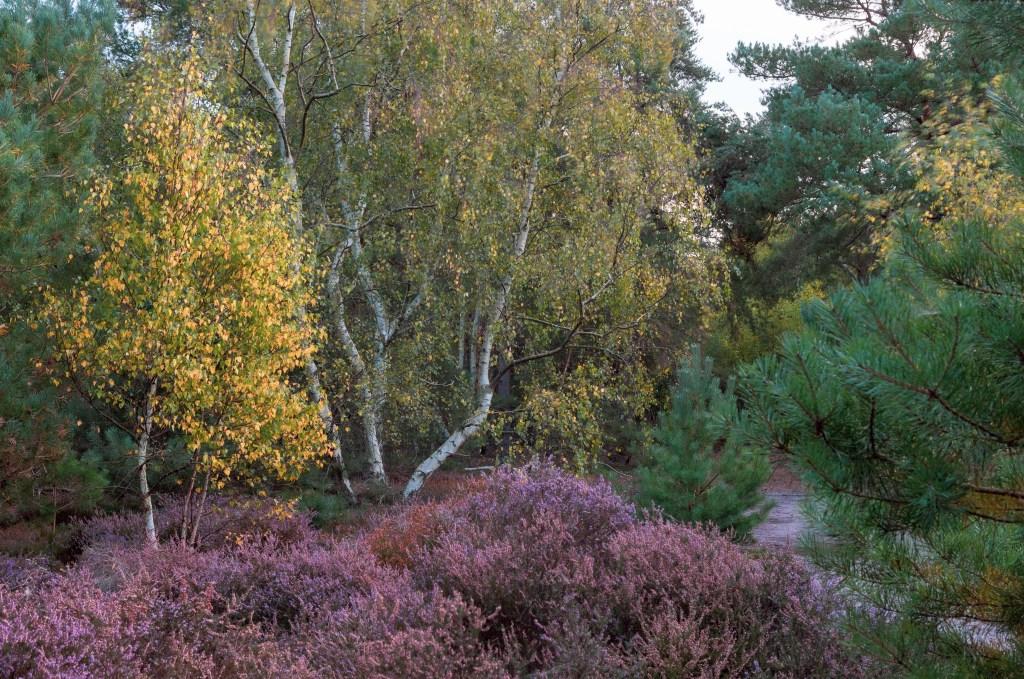 Wavering, Tunstall Forest, Suffolk