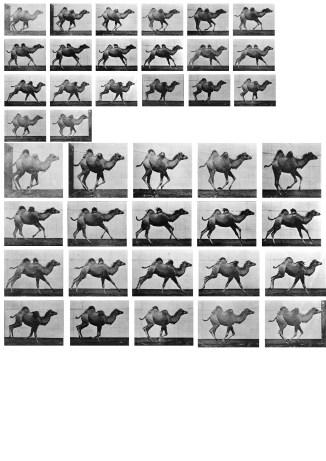 camel_print