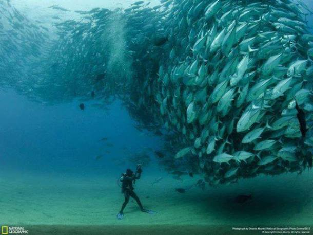 It's already difficult enough for the NFL to pick a prized catch from the multitudes. Even so, it needs to keep getting better. See below. Photo from National Geographic.