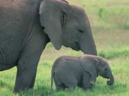 mamma-elefante-con-cucciolo1.jpg