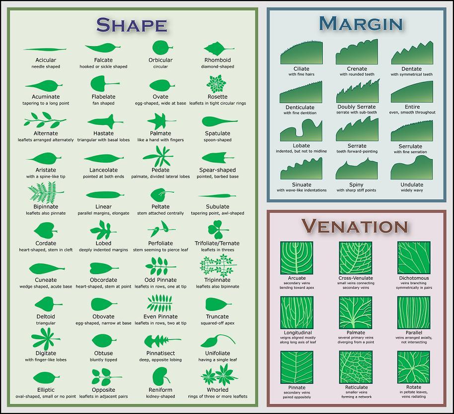 Plant Profiles
