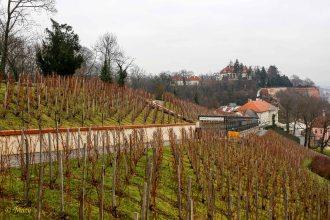 Vineyards at Hrad Castle - Prague, Czech Republic