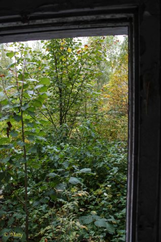 first story - nature is reclaiming its lost ground