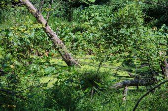 little swamp