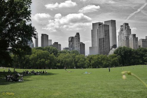 Central Park - the green part of it :)