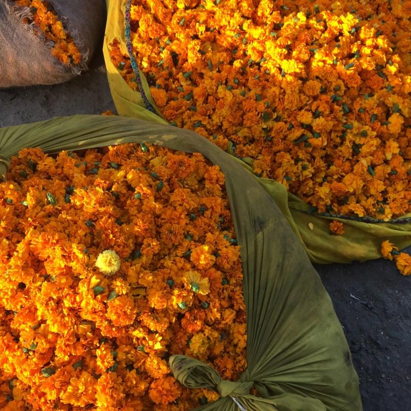 wholesale flower market jaipur maud interiors