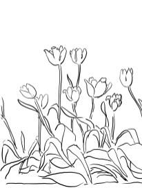 14_tulip_mm