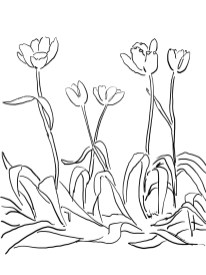 15_tulip_mm