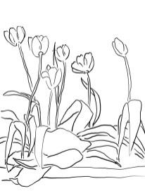 5-tulip_mm