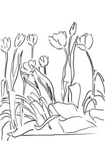 6-tulip_mm