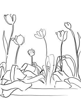 9_tulip_mm