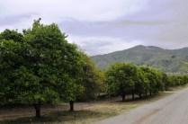 vers Ventura