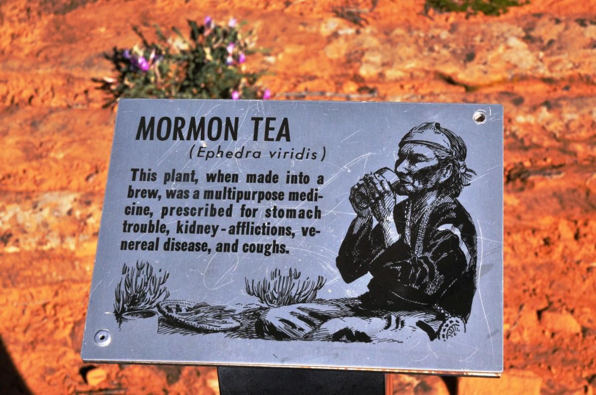 Mormon Tea (Ephedra)