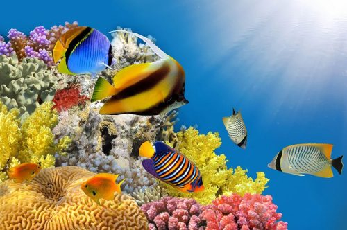Enjoy this beautiful reef on the afternoon snorkel cruise aboard the Paragon II