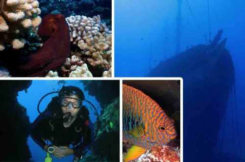 Dive Lanai – Tons of Fish and Epic Caves